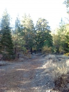 Unmarked Trailhead for Acorn Trail