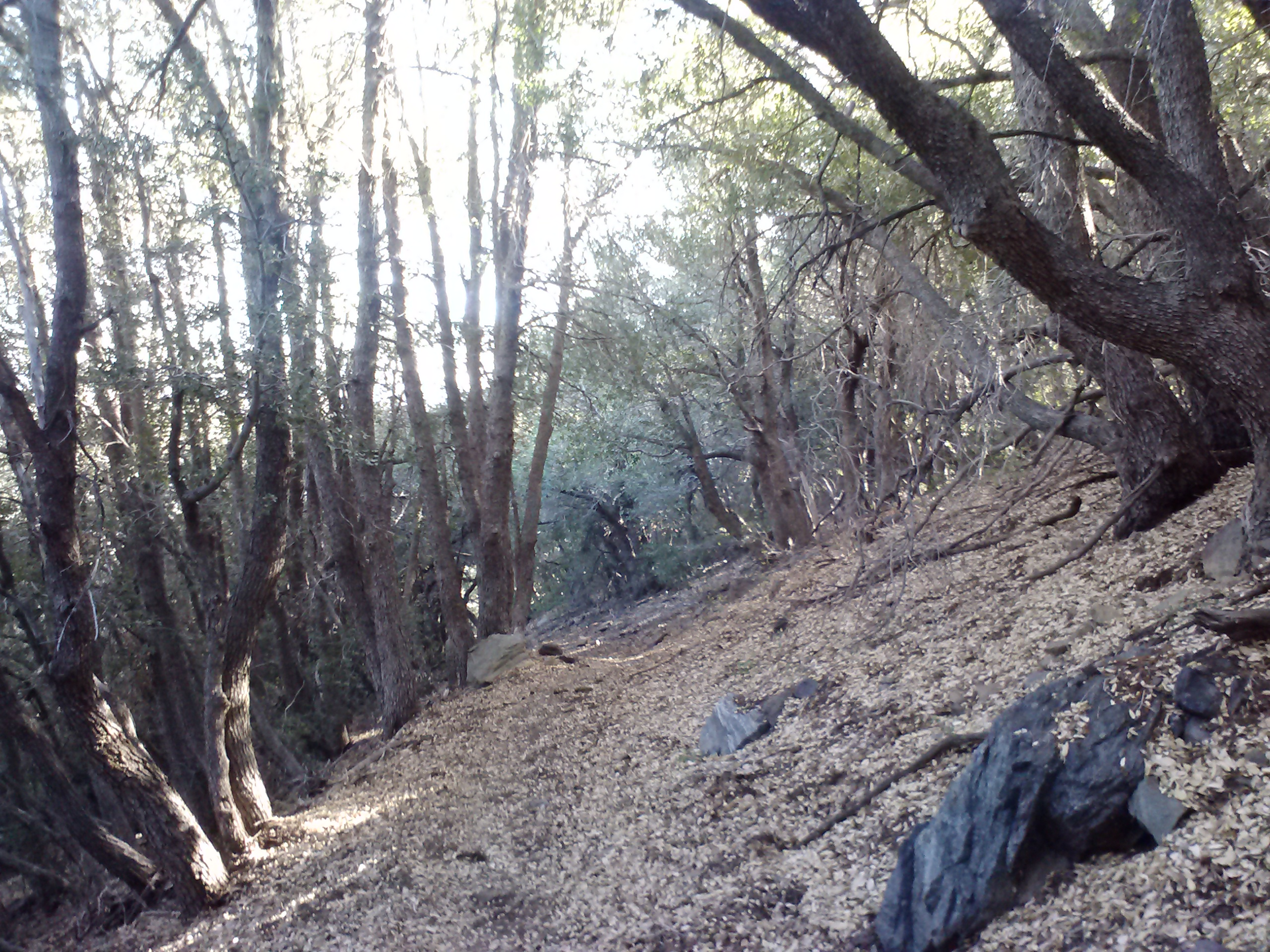 descending to hwy 2 and mt. baden-powell trailhead