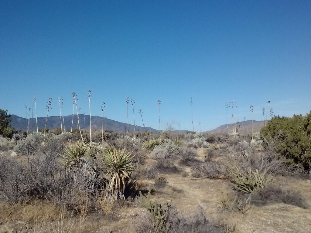 pct-section-a-anza-borrego-desert-18