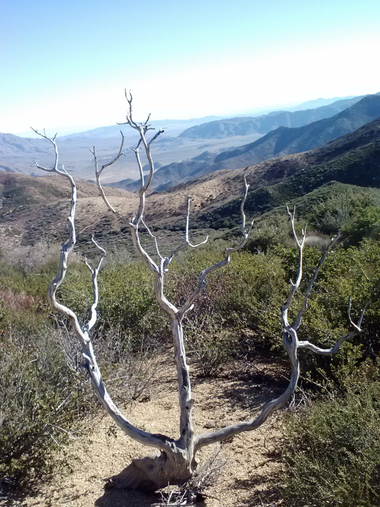 pct-section-a-mount-laguna-mountains-22