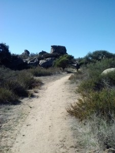 pct-section-a-laguna-mountains-10