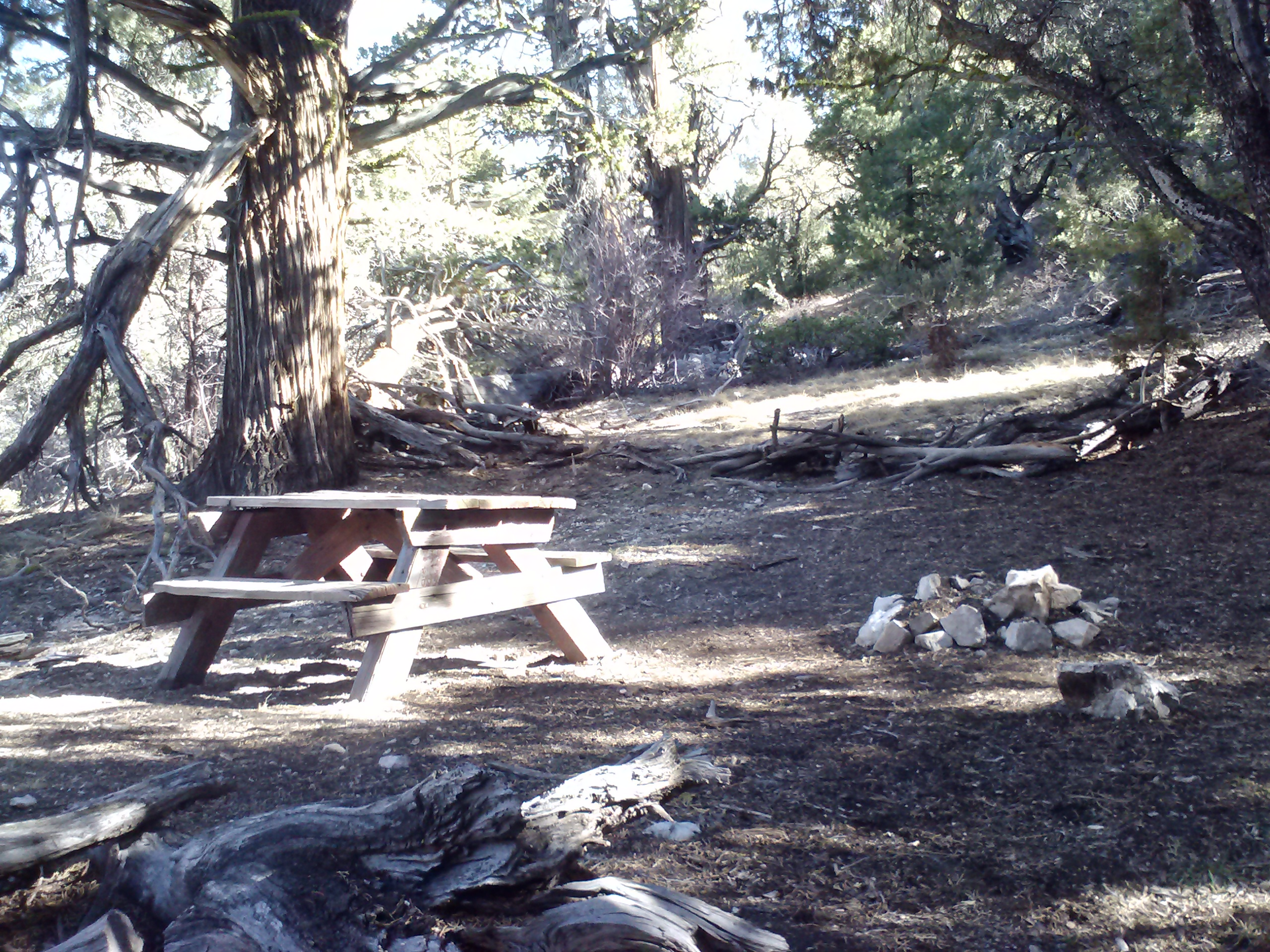 An unexpected little picnic table