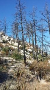 Climbing north from Angeles Forest Hwy