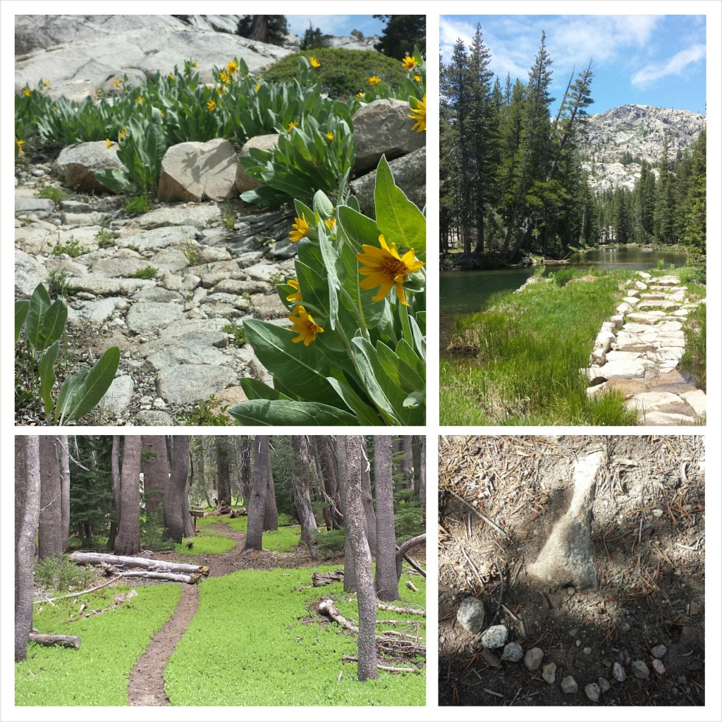 PCT Section I Toiyabe National Forest Yosemite Wilderness stone trails wildflowers