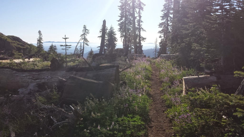 PCT Section N Plumas National Forest Frog Spring