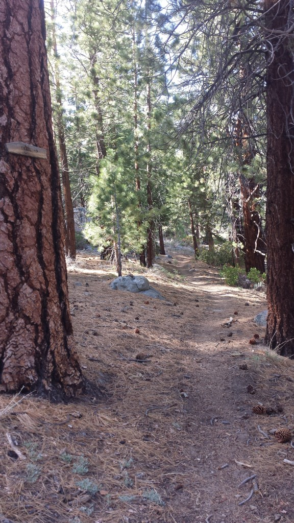 PCT Section G Sequoia National Forest cow creek