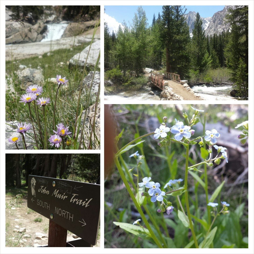 PCT Section H Kings Canyon National Park sierra plants wildflowers