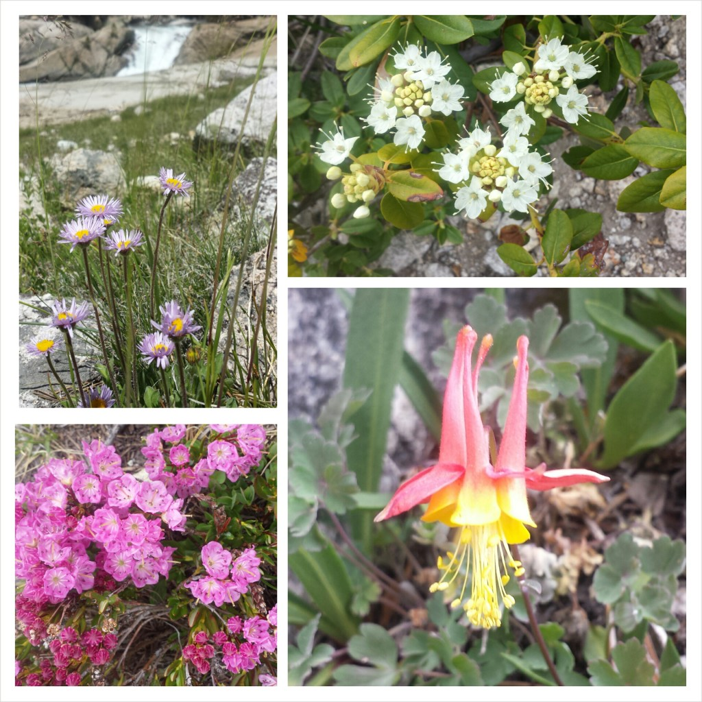 PCT Section H Kings Canyon National Park sierra wildflowers