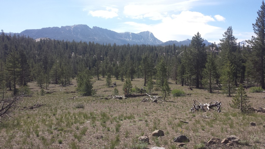PCT Section I Toiyabe National Forest