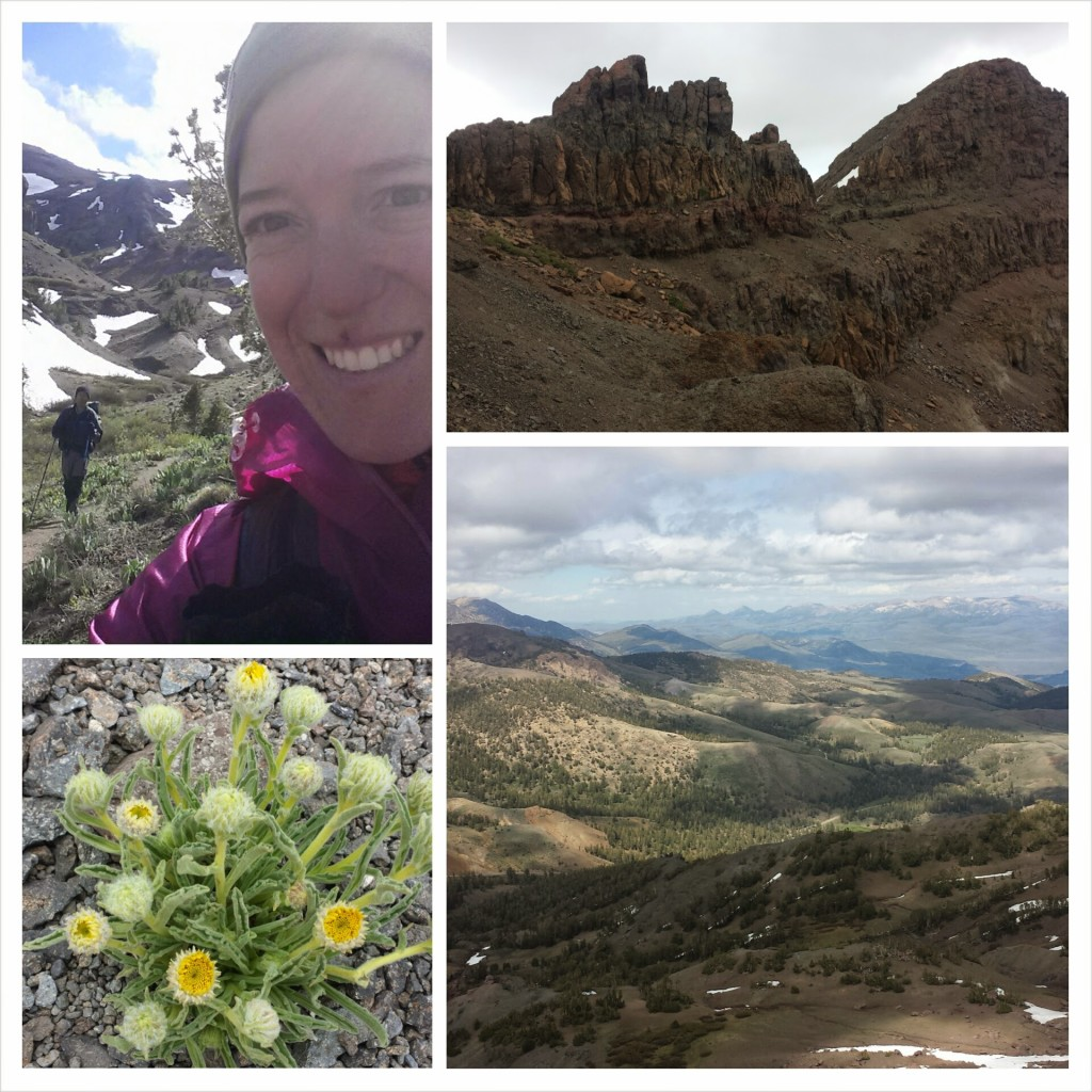 PCT Section I Toiyabe National Forest Sonora Pass Hwy 108 wildflowers