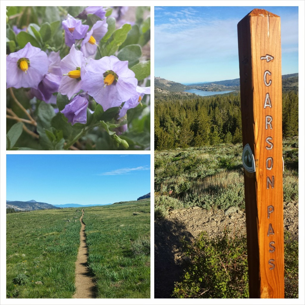 PCT Section J El Dorado National Forest Carson Pass wildflowers