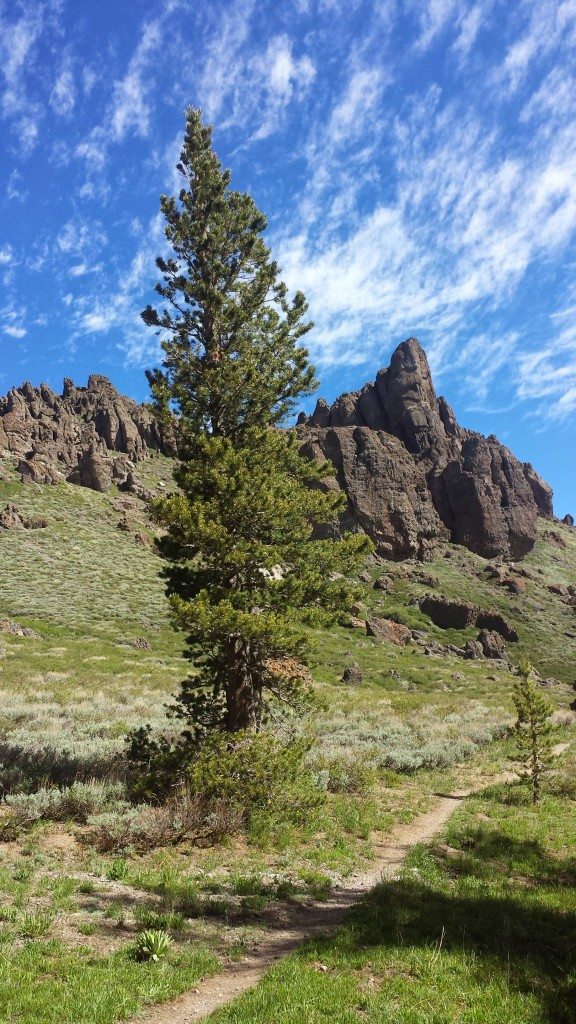 PCT Section J Toiyabe National Mokelumne Wilderness
