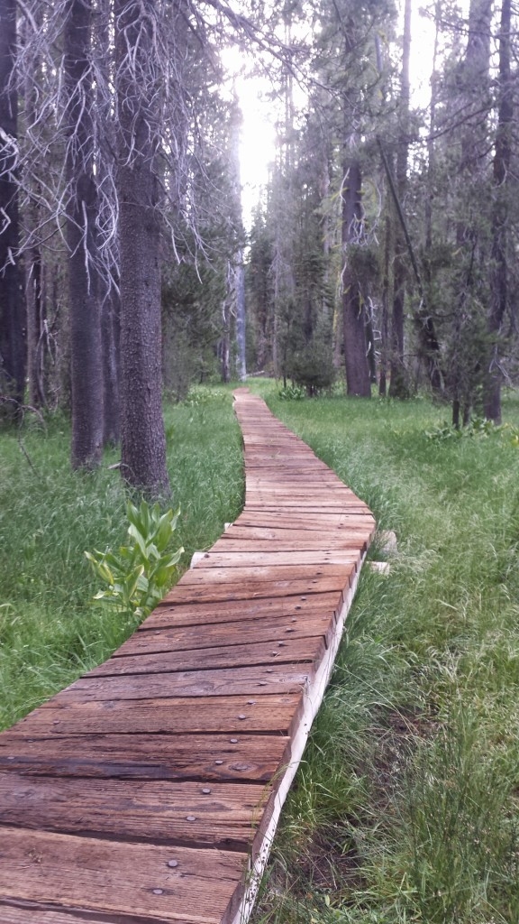 PCT Section N Lassen National Forest boardwalk