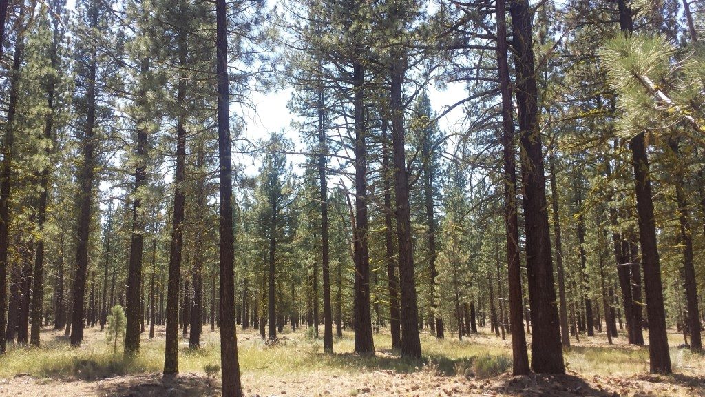 PCT Section N Lassen National Forest Old Station