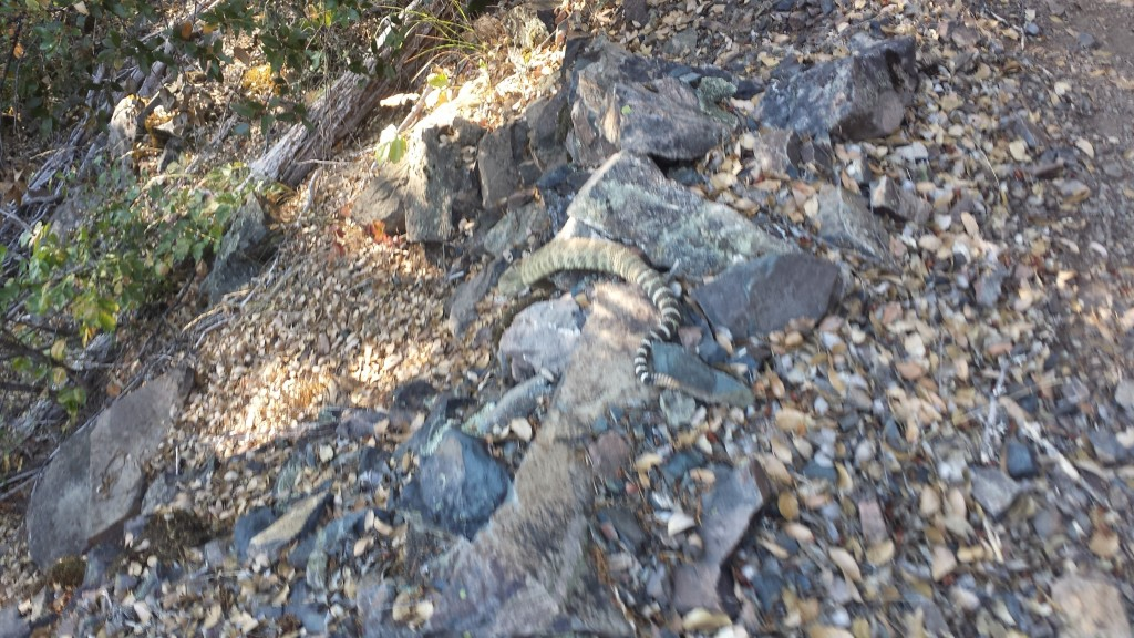 PCT Section O Shasta Trinity National Forest McCloud River rattlesnake