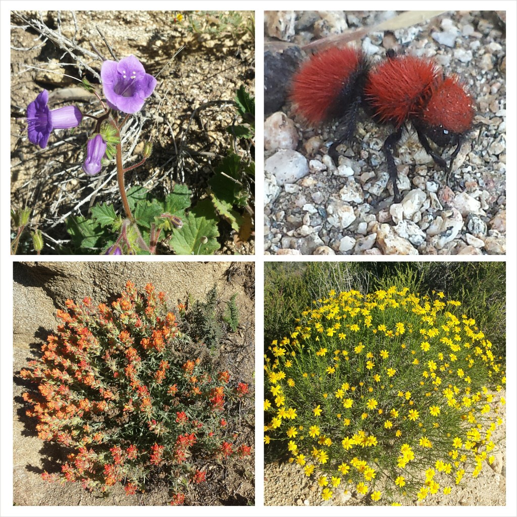 Wildflowers and a velvet ant