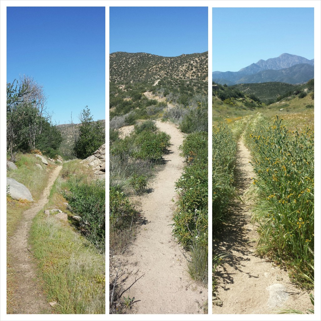 pct_section_c_san_bernardino_mountains_trail.jpg