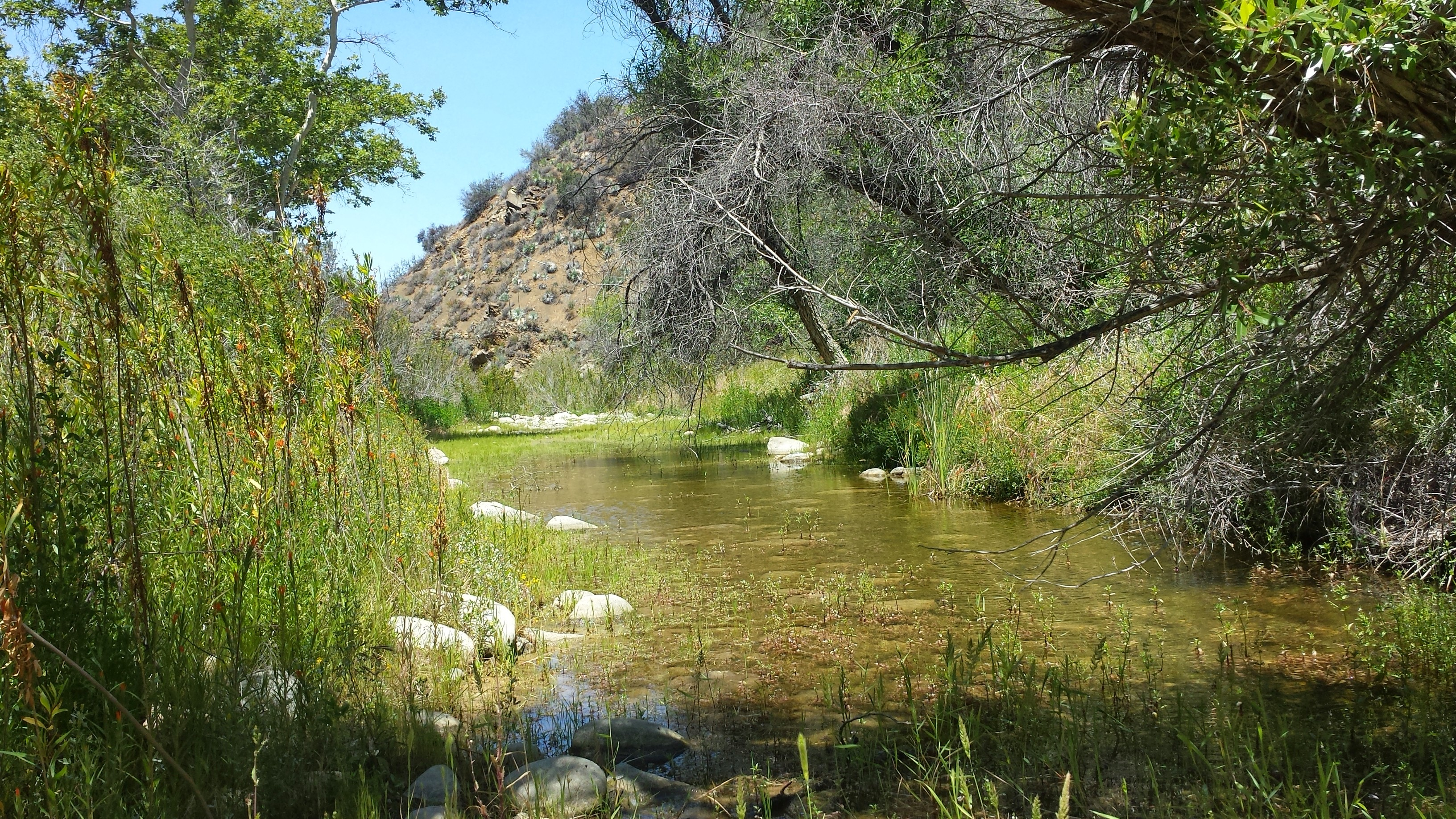 los-padres-national-forest-san-rafael-wilderness-lower-manzana-trail-2