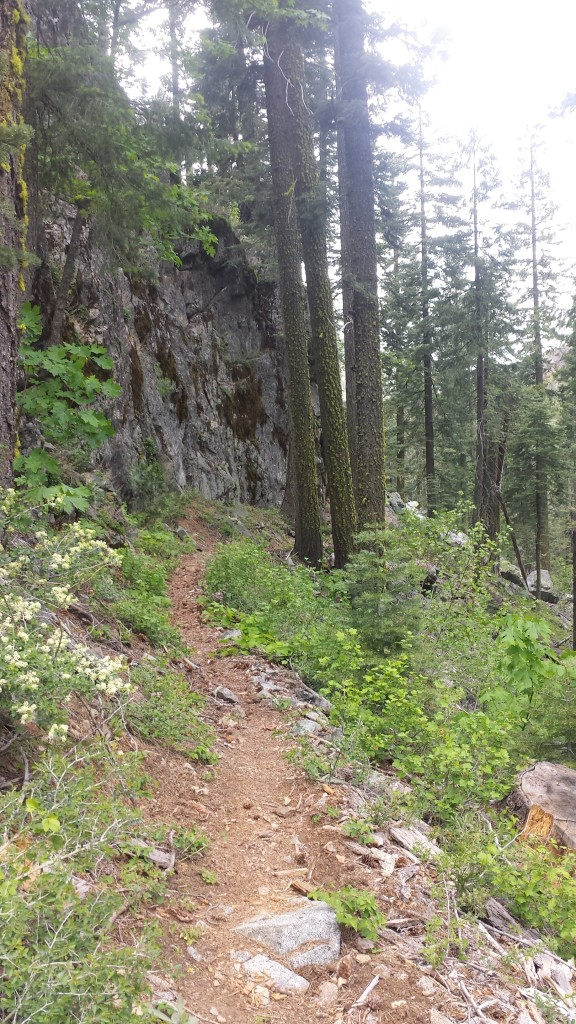 PCT-CA-Section-L-46-Plumas-National-Forest