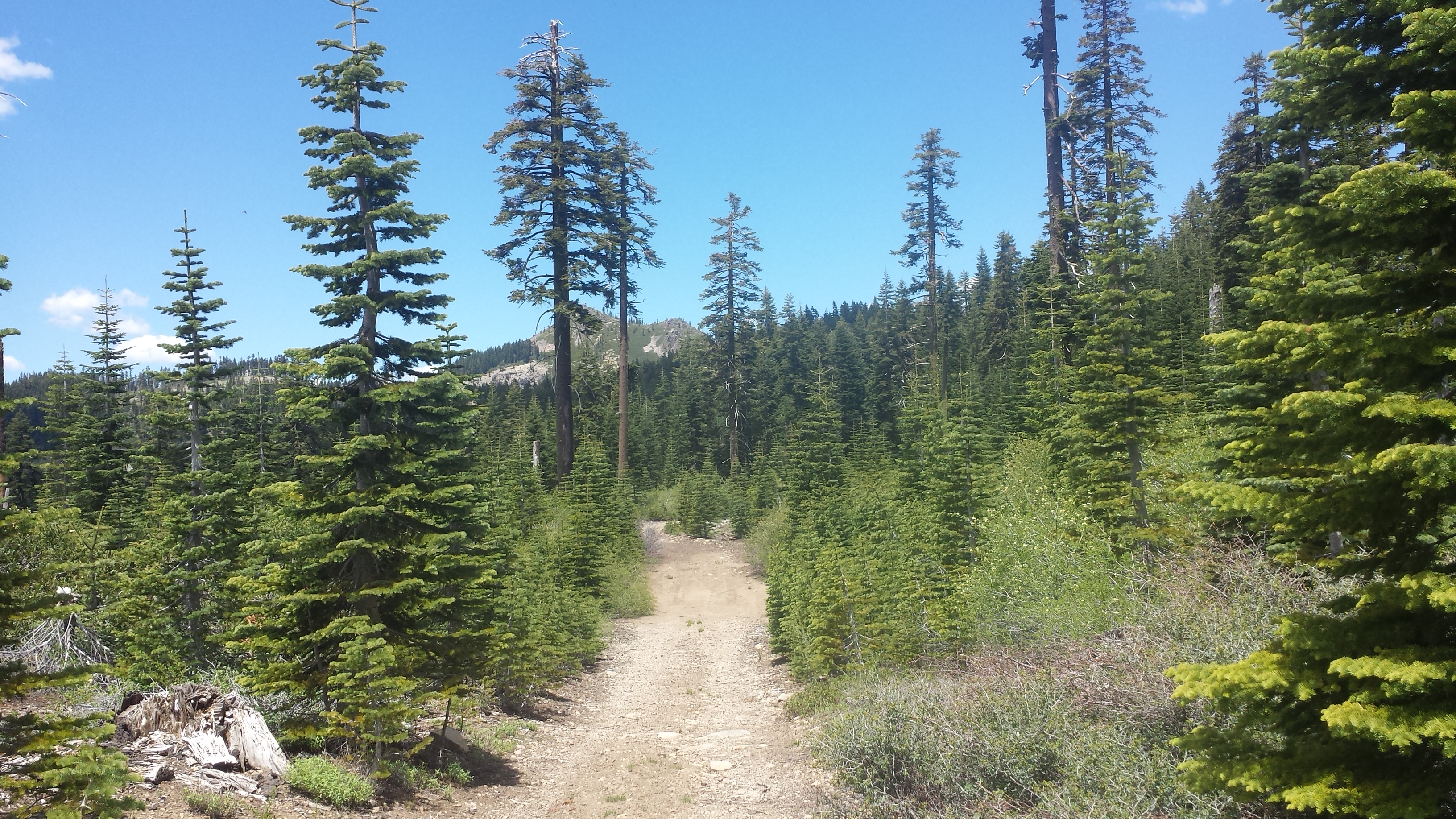 PCT-CA-Section-M-44-Plumas-National-Forest