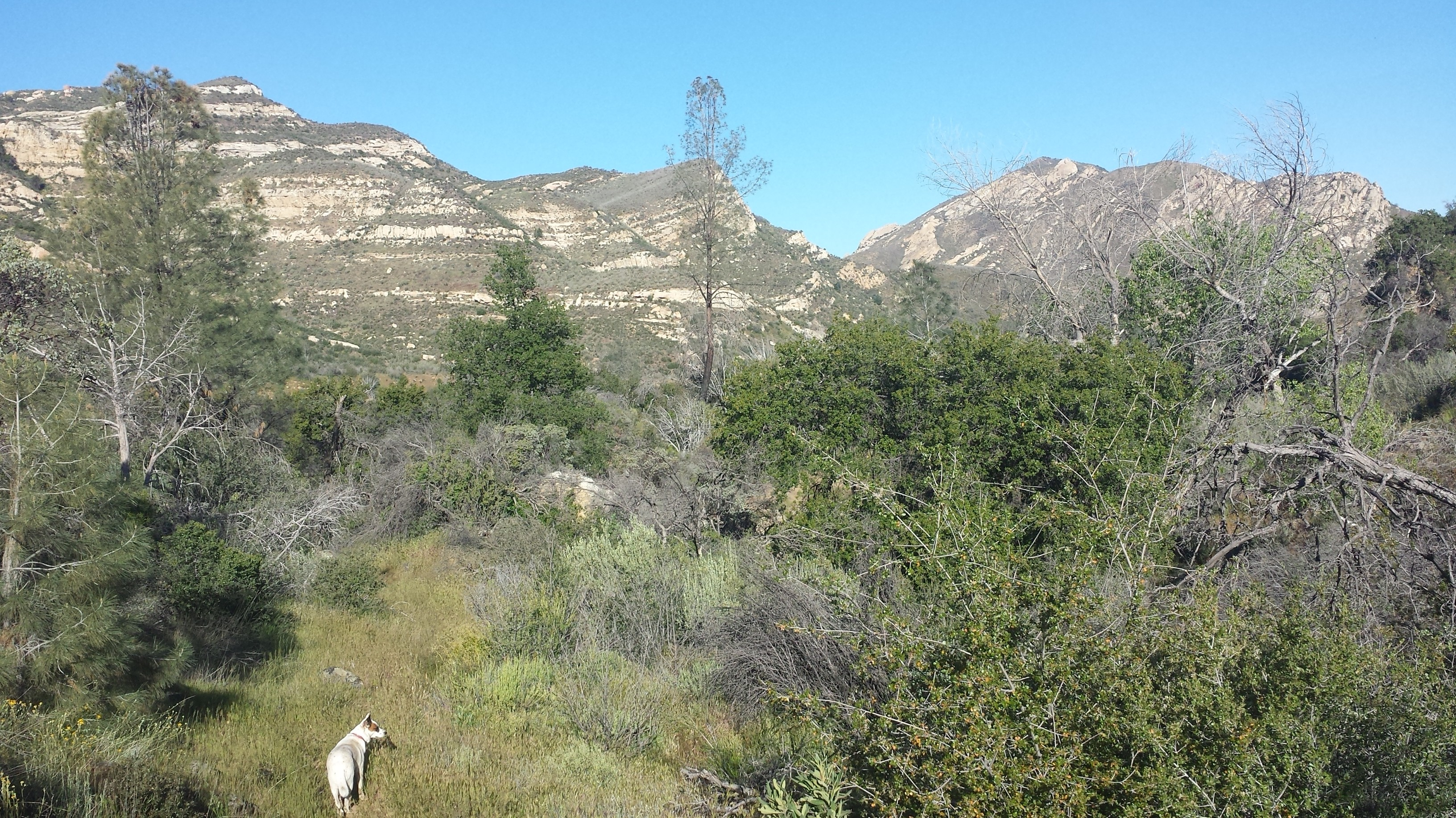 Los-Padres-National-Forest-San-Rafael-Wilderness-133Sisquoc-River-Trail