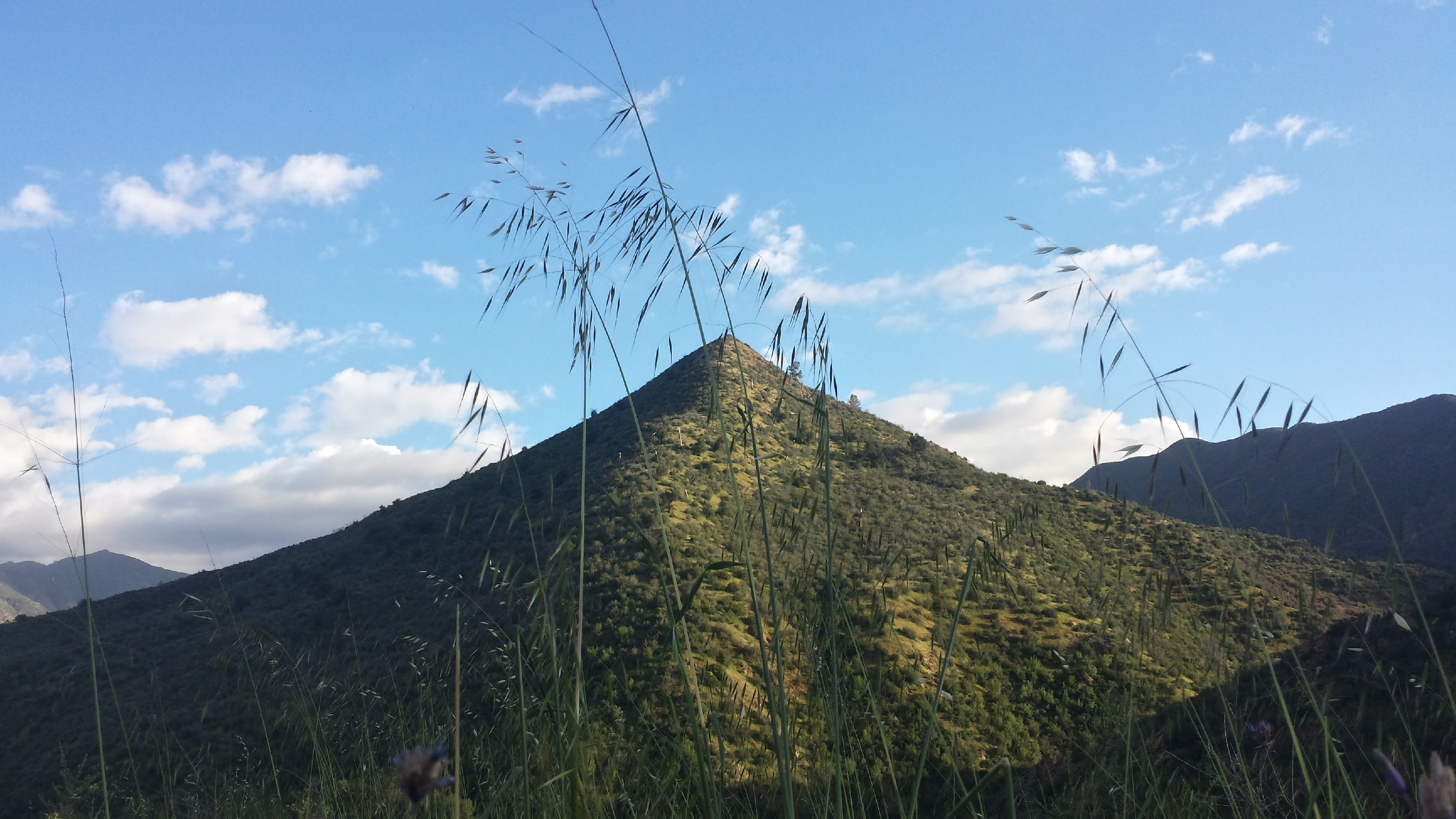 Tall grasses, blue skies and chaparral-covered mountains are quintessential Los Padres.