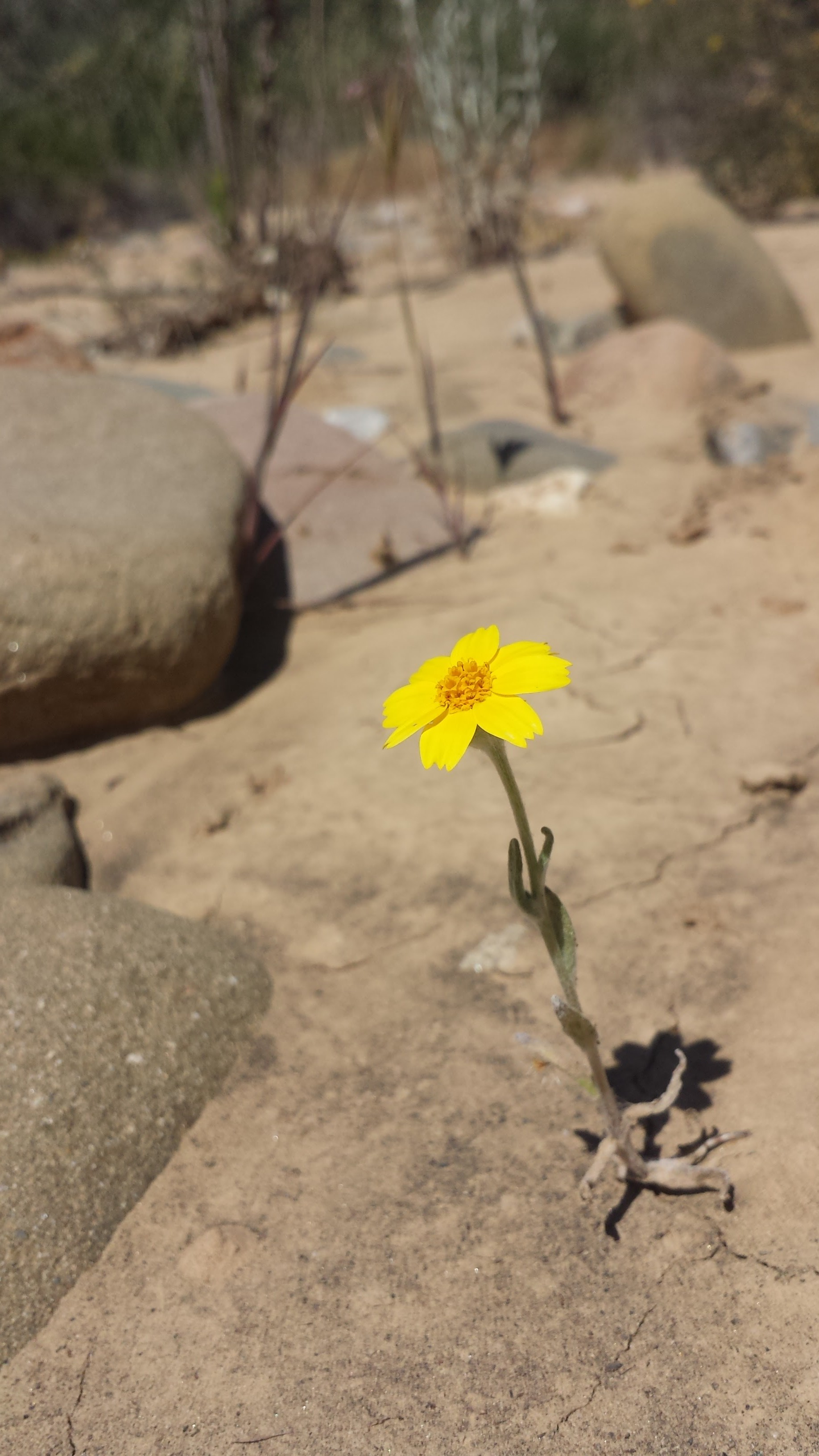 A bloom in the riverbed